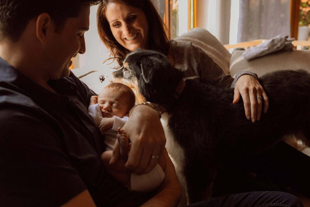 dog and newborn cuddled on couch photo session
